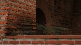 沿途有树的入口看法对古庙被放弃的地下墓穴和隧道的  股票视频