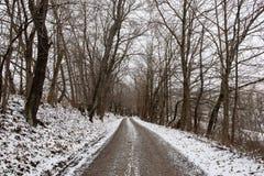 沿途有树的冬天车道 免版税库存照片