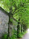 沿途有树的墙壁在爱尔兰 库存照片