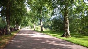 沿途有树的大道在英国 图库摄影