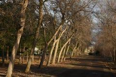 沿途有树的车道 库存图片