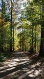沿途有树的驱动 免版税库存图片