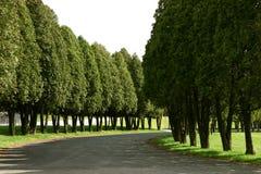 沿途有树 免版税库存照片
