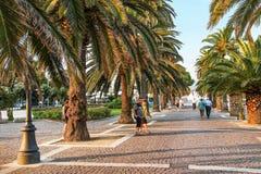 沿道路方式的棕榈树 免版税库存照片