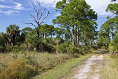 沿道路的密集的森林 免版税图库摄影