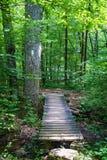 沿阿巴拉契亚足迹的一个远足者人行桥 库存图片