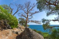 沿陡峭的海岸的一条道路 免版税库存照片