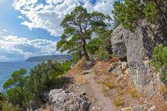 沿陡峭的海岸的一条道路 库存图片