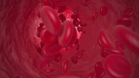 沿静脉的红血球移动 3D动画 皇族释放例证