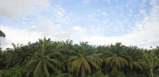 沿高速公路马来西亚的种植园 免版税库存照片