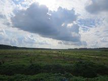 沿高速公路马来西亚的种植园 库存图片