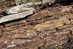 沿鳟鱼小河的下落的树在Poconos 免版税图库摄影