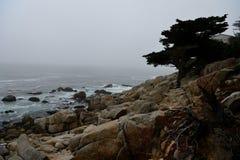 沿17英里驱动的海岸线 库存照片
