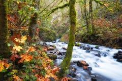 沿Bridalveil小河哥伦比亚河峡谷的秋天 库存图片