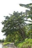 沿Bulatukan河, Tamlangon, Matanao,南达沃省,菲律宾的专用线 免版税库存照片