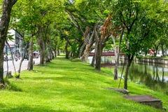 沿Chiangmai市护城河,泰国的树 免版税库存照片