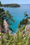 沿Coromandel海岸线的蒲苇 库存图片