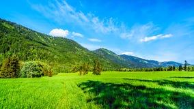 沿Heffley路易斯小河路的山在BC加拿大 免版税库存照片