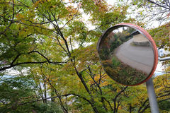 沿Higashiyama走的路线的秋叶在高山市 库存照片
