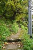 沿Higashiyama走的路线的秋叶 库存照片
