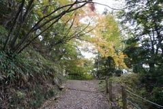 沿Higashiyama走的路线的秋叶 免版税库存照片