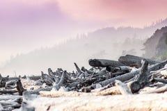 沿Kalaloch海滩的漂流木头 库存图片