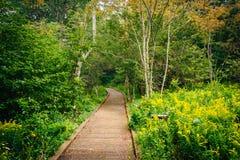 沿Limberlost足迹的木板走道道路在Shenandoah国民 库存照片