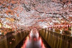 沿Meguro河,目黑区,东京,日本的樱桃树是在晚上春天打开 图库摄影