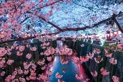 沿Meguro河,目黑区,东京,日本的樱桃树是在晚上春天打开 免版税库存图片