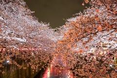 沿Meguro河,目黑区,东京,日本的樱桃树是在晚上春天打开 免版税库存照片