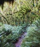 沿Milford轨道的雨林,新西兰 免版税图库摄影
