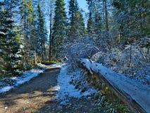 沿Schoolcraft供徒步旅行的小道的下落的树在Itasca国家公园在明尼苏达 免版税库存照片