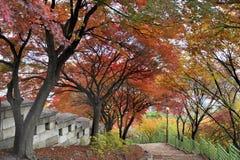 沿Seonggwak堡垒墙壁的人行道 免版税库存照片