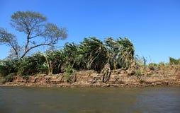 沿Tarcoles河的风景 库存图片