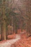 巴法力亚冬天森林 免版税图库摄影