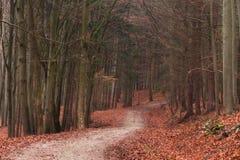 巴法力亚冬天森林 库存照片