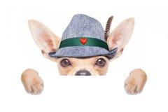 巴法力亚啤酒狗 免版税库存照片