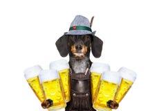 巴法力亚啤酒狗 库存图片