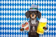 巴法力亚啤酒狗 库存照片