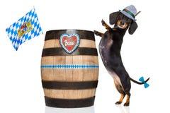 巴法力亚啤酒狗 免版税库存图片