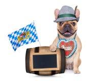 巴法力亚德国哈巴狗狗 免版税库存照片