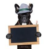 巴法力亚狗 库存图片