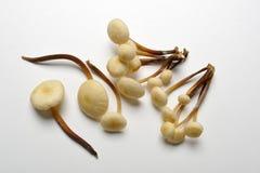 法国号国王蘑菇喇叭 免版税库存照片