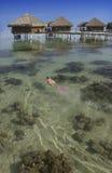 法国和平的波里尼西亚南塔希提岛 免版税库存照片