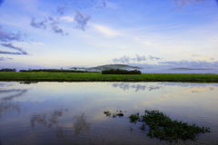法国圭亚那kaw沼泽 免版税图库摄影