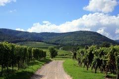 法国山葡萄园vosges 免版税图库摄影