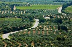 法国庭院橄榄色普罗旺斯路 免版税库存图片