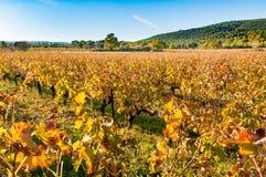 法国普罗旺斯葡萄园 库存图片