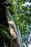 法国梧桐树 免版税库存照片