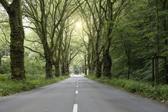 法国梧桐胡同在有路的春天 库存图片